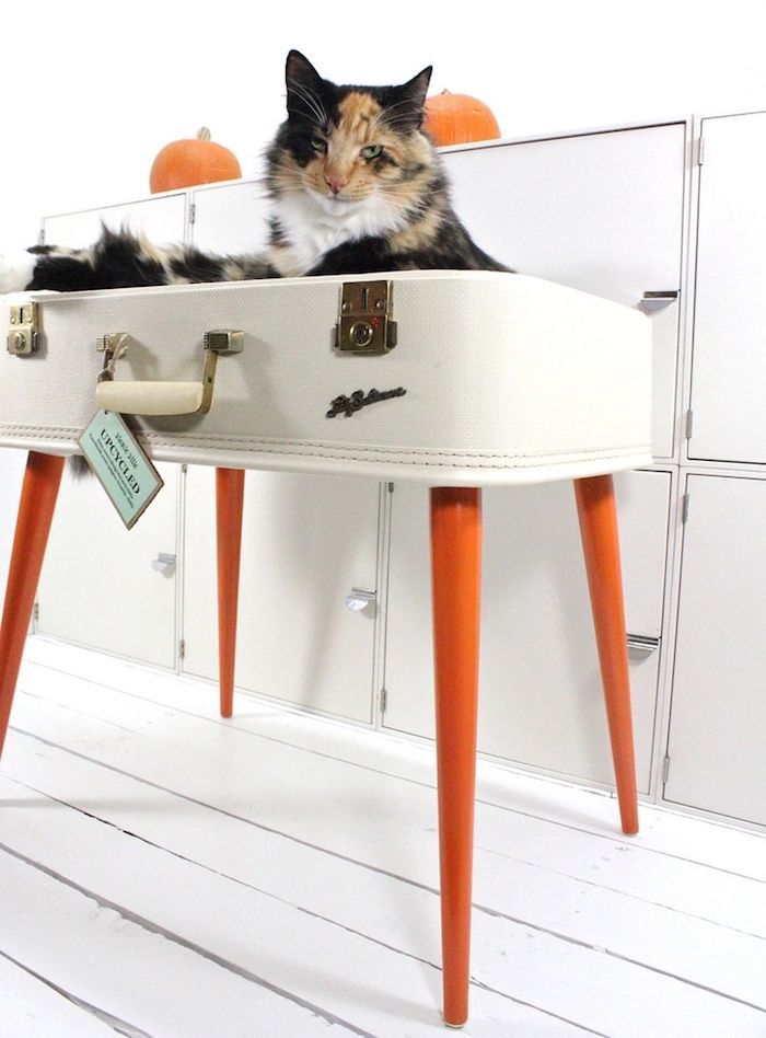 8 DIY Projects for cat lovers