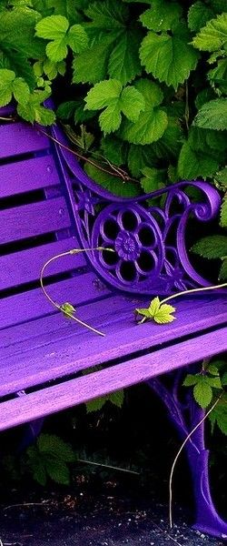 If I ever have a bench in my yard, I hope it looks exactly like this and that it's surrounded by greenery because green and purple go well together.