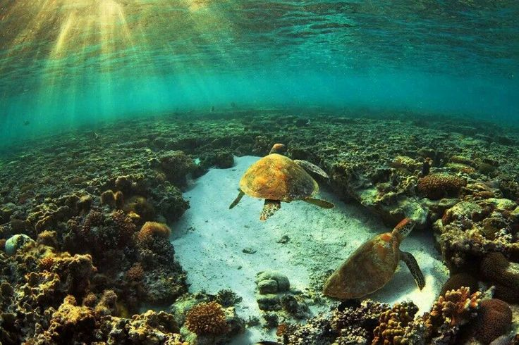Australia, Lady Elliot Island, Southernmost Cay of the Great Barrier Reef