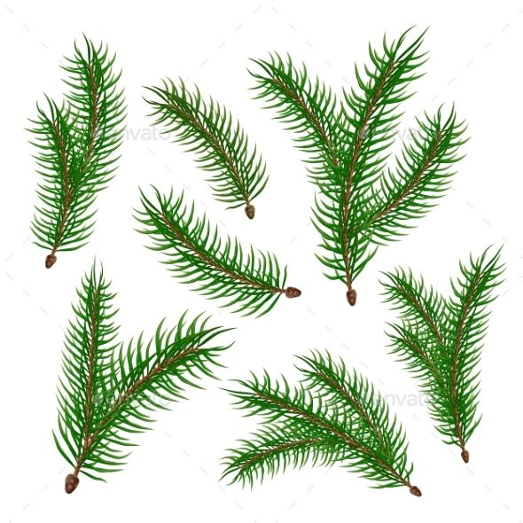Vector Realistic Spruce Fir Tree Branches Set Tree Branches Fir Tree Forest Plants