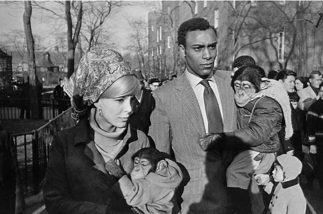 garry-winogrand-monkeys.png (632×419) | Photo by Garry Winogrand