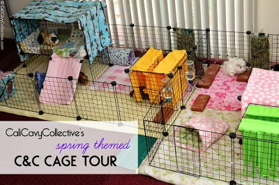 Cage tour with spring themed fleece. Includes links to cage accessories and DIY tutorials.