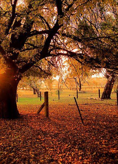 Adelaide Autumn