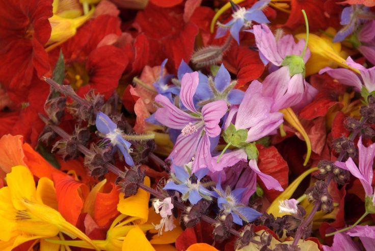In de Historische Groentehof kweken we 50 soorten eetbare bloemen.  www.vergetengroenten.nl