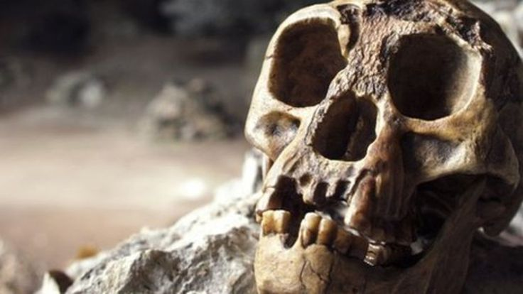 """Hobbit find shows tiny humans shrank 'rapidly' - BBC News. Scientists have discovered the 700,000-year-old ancestor of the tiny primitive human known as """"the Hobbit"""". Its fossils indicate that the normal-sized primitive humans who first set foot on the Indonesian Island of Flores shrank """"rapidly"""" to become Hobbit-sized."""