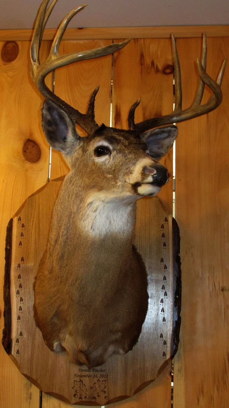 19 Best Rustic Deer Mounting Boards Images On Pinterest Deer Hunting Elk Hunting And Boards