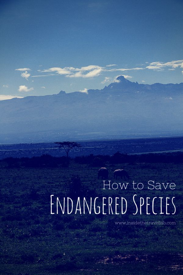 How to Save Endangered Species | Causes and Preventions