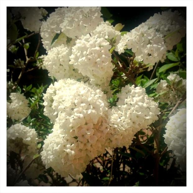 I fiori che non colsi - 24 aprile 2013, via Flickr.