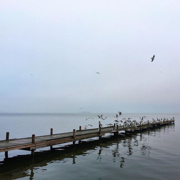 Moin vom Meer. Mit dem Podcast der smnerds w/ @larsbudde auf dem Ohr läuft es sich hervorragend.  #steinhude #steinhudermeer #pier #steinhuder #hagenburg  #runkeeper #runtastic #6k  #nature #light #cloudporn #weather #photooftheday #skylovers  #mothernature #fogporn #foggymorning #podcast #smnerds #hannover #dienstag