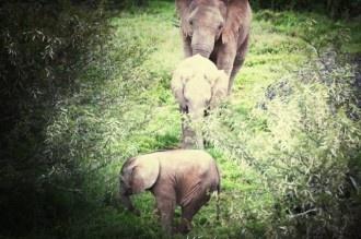 A trio of elephants