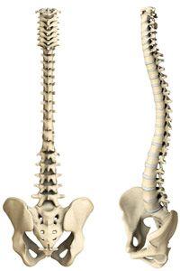 I love spines!