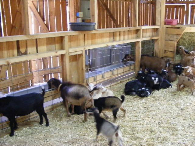 """love the 6x6 cattle fencing to eat """"through"""" on the other side.  Less waste of feed!"""
