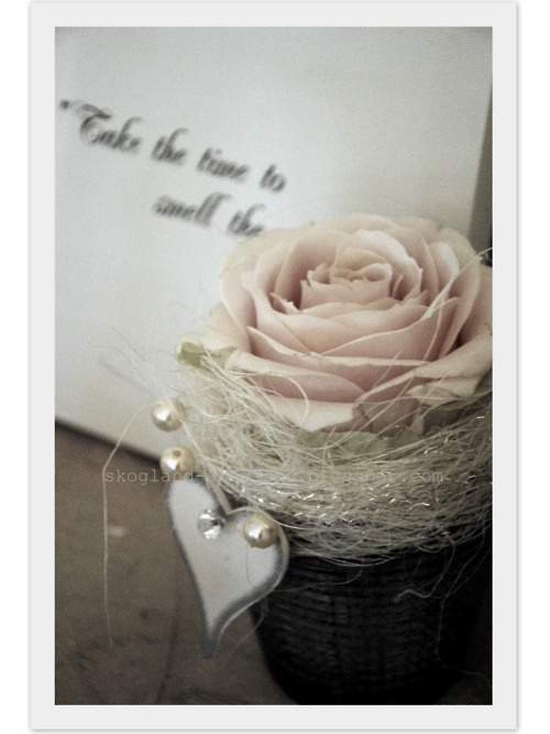 great idea for something small and inexpensive for a table setting