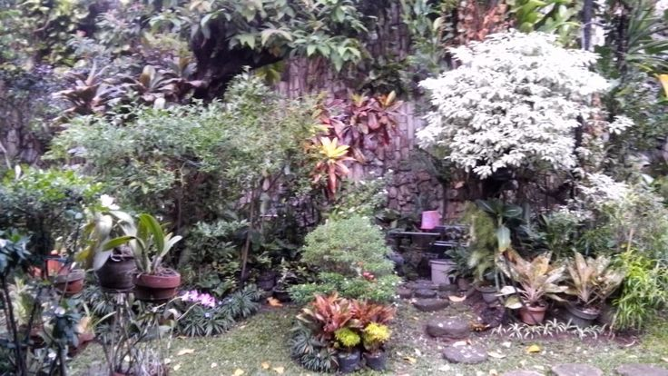 The backyard garden. My auntie always takes care of her plants very well. They really are in good hands.