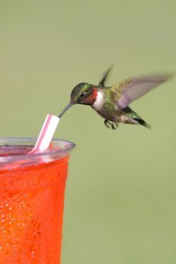 Another way to feed hummingbirds! Would certainly set the nectar container in the middle of a water filled container to keep the ants out.