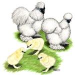 Buy White Silkie Bantam Chicks, White Silkies Bantam Chickens for Sale, White Silkie Bantam Chicken Image Photo Picture