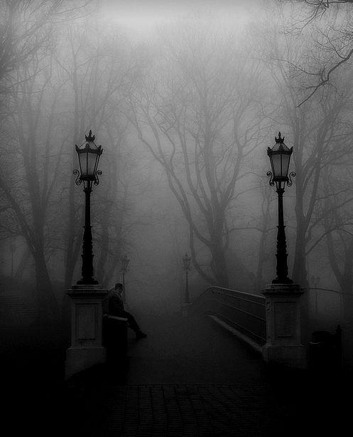 Bosque oscuro.