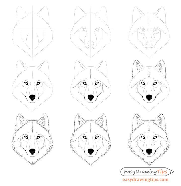 Wie zeichnet man ein Wolfsgesicht & Kopf Schritt für Schritt – EasyDrawingTips