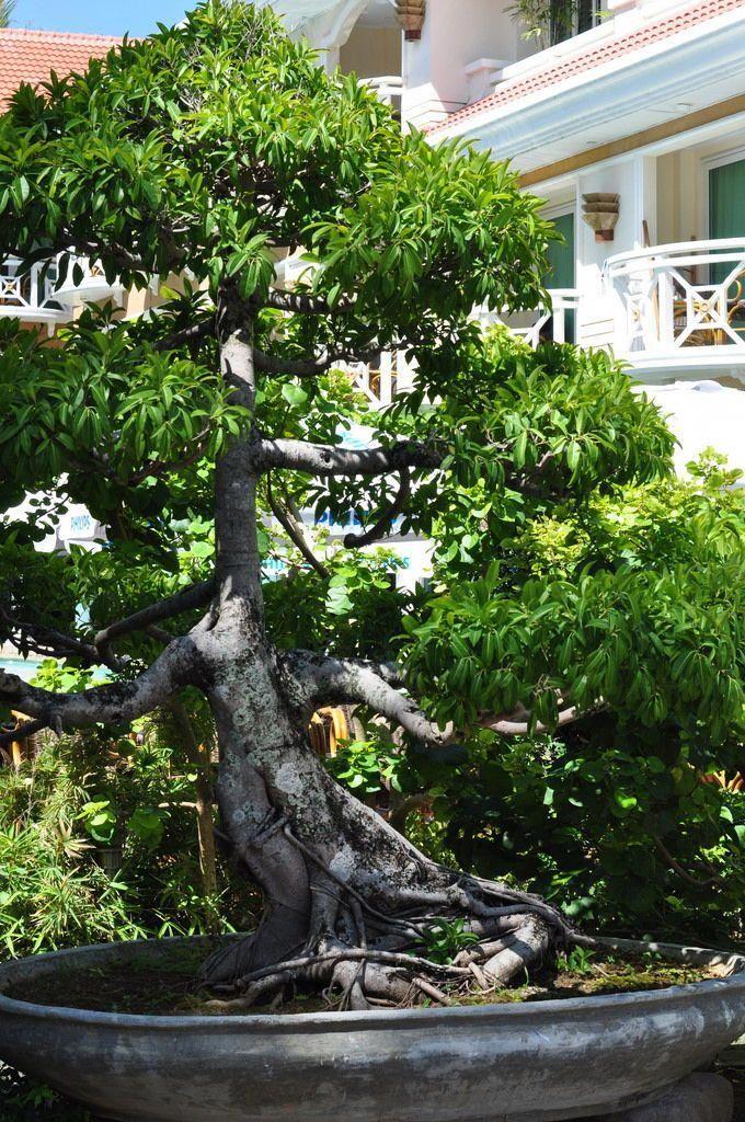Bonsai Tree Care Instructions #outdoorbonsai   Bonsai