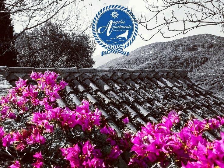 Old village of Alonissos ⚫⚪⚫⚪ #angelos_apartments #Alonissos #Sporades #Greece #greekislands #discovergreece #traveling #discoveralonissos #visitalonissos #island #old_village #chora #summer