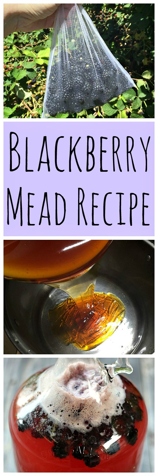 Make this simple and tasty blackberry mead recipe when blackberries are in season!