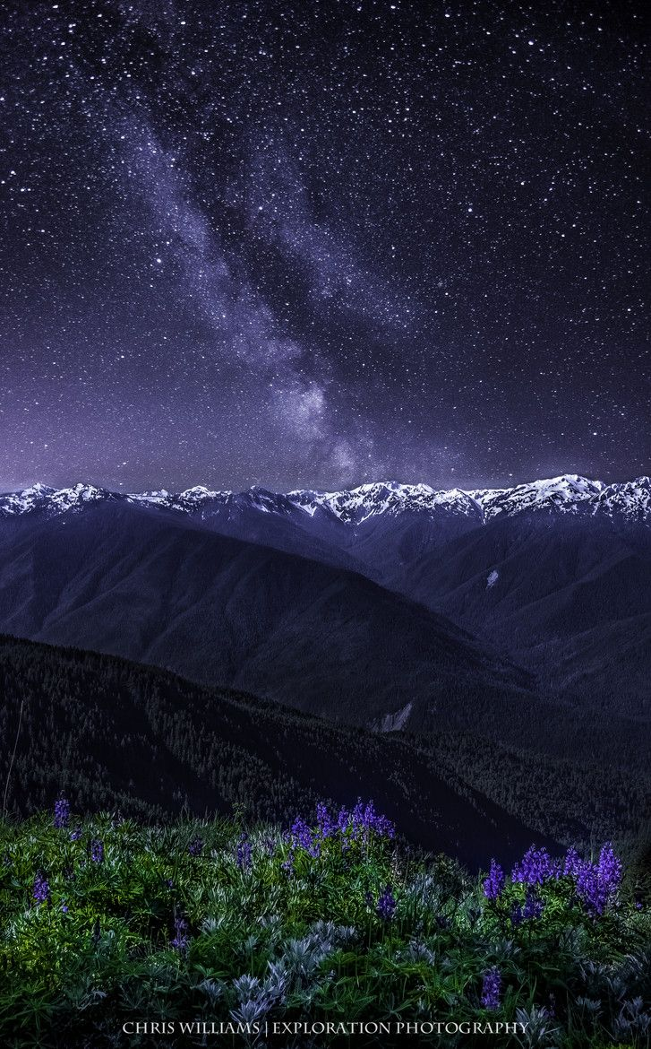 Wildflowers and the Milky Way over Hurricane Ridge, Olympic National Park, WA | 500px ♥ Seguici su www.reflex-mania.com