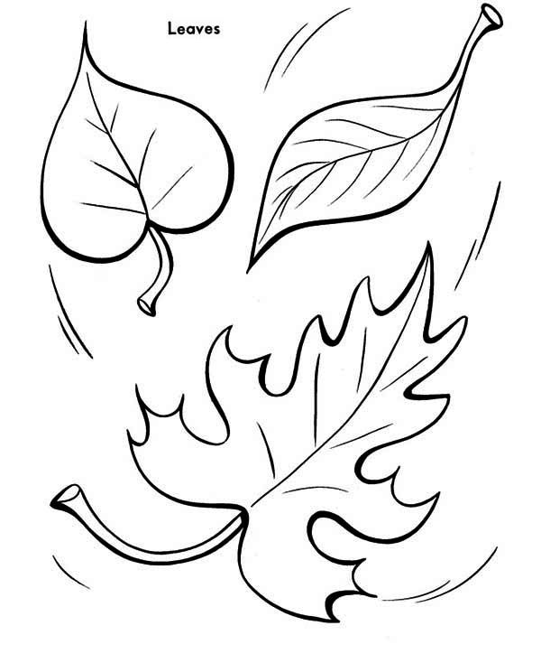 Autumn, : Autumn Leaf To The Ground Coloring Page Leaf Coloring Page, Fall  Leaves Coloring Pages, Leaf Drawing