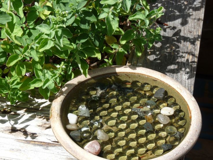 how to get rid of bees in bird bath
