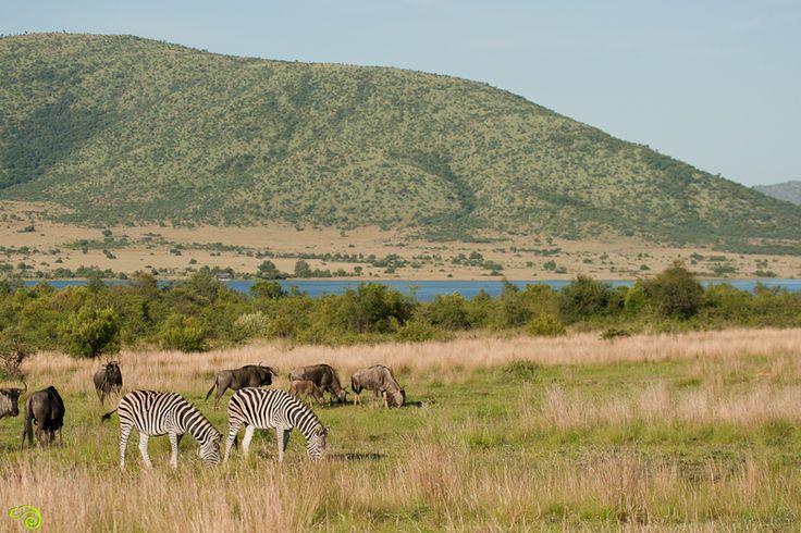 Pilanesberg-Day-Trip-Wild-Eye-5-of-12.jpg (800×533)