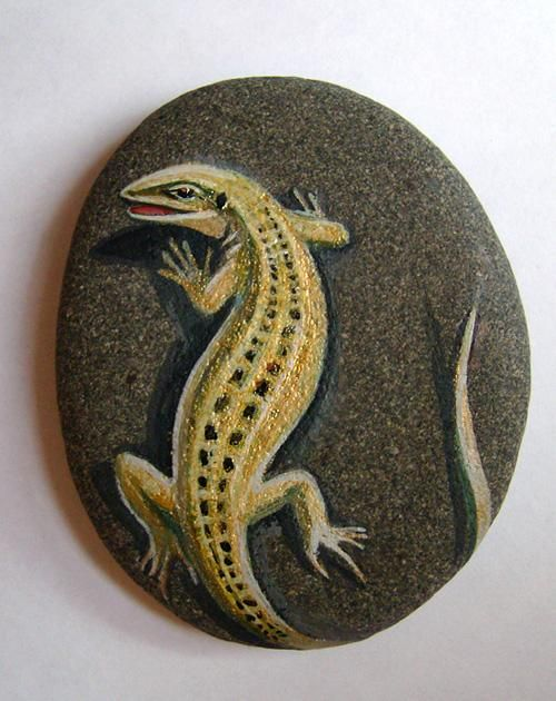 Great painted lizard that is rock sunning...