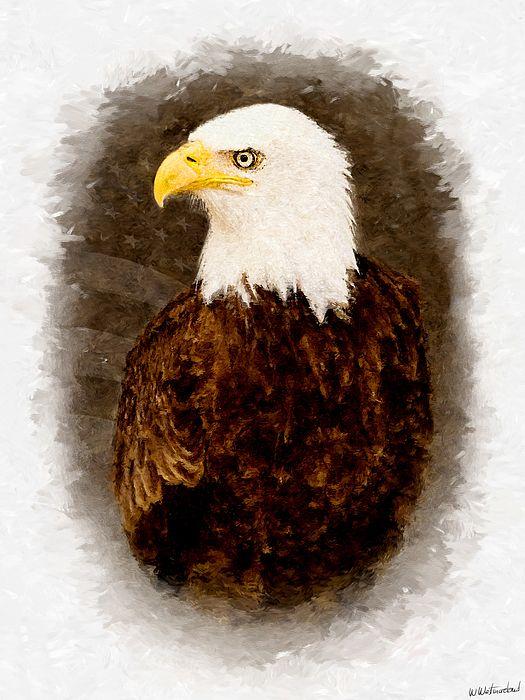 American Bald Eagle - Flagged Version - Weston Westmoreland