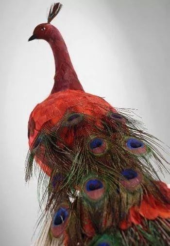 What color is this peacock?  -  Pinned 1-17-2017.