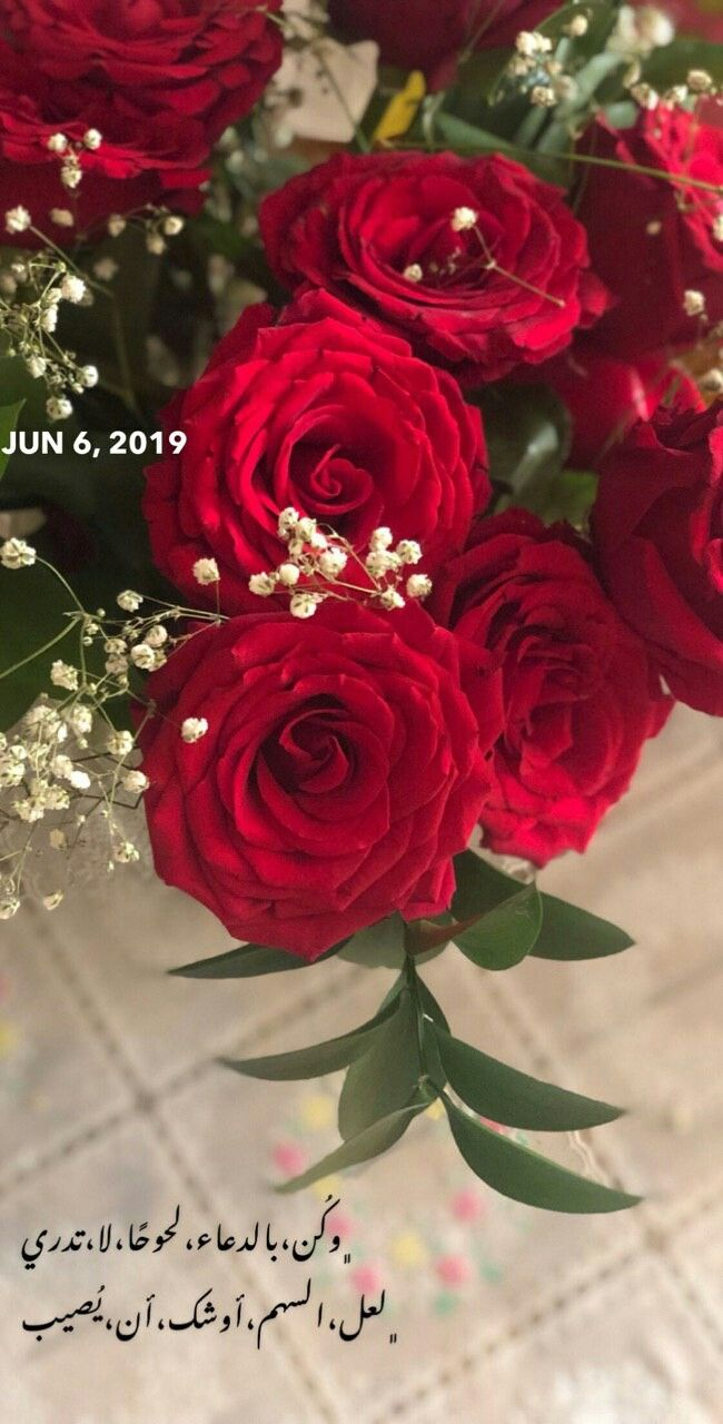Pin By زهرة الياسمين On دعاء Duaa Flowers Plants Rose