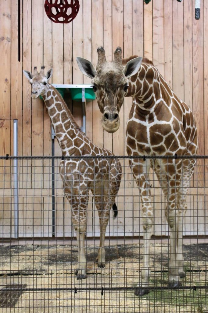 67 best Detroit Zoo images on Pinterest Detroit zoo The zoo and Zoos