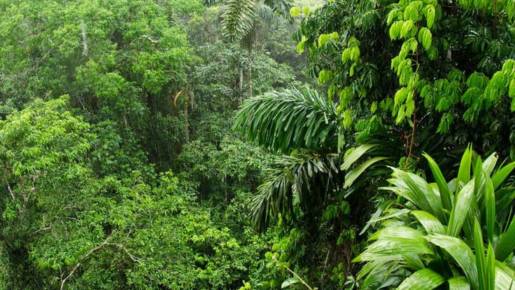 Amazon rainforest ability to soak up carbon dioxide is falling ...