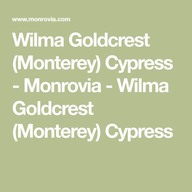 Die besten 25+ Cypress plant Ideen auf Pinterest Privatsphäre - poolanlagen im garten