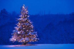 Photo: Lequel est plus écologique : un arbre de Noël artificiel ou un vrai sapin?