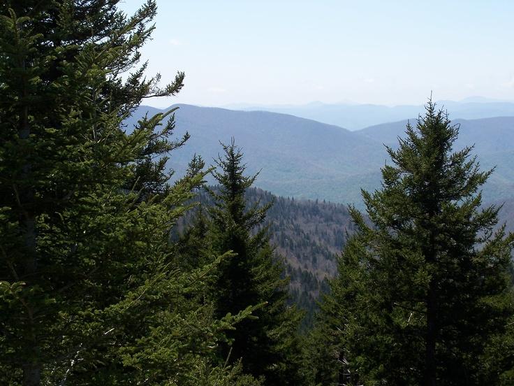 Pisgah National Forest:  Balsam trees