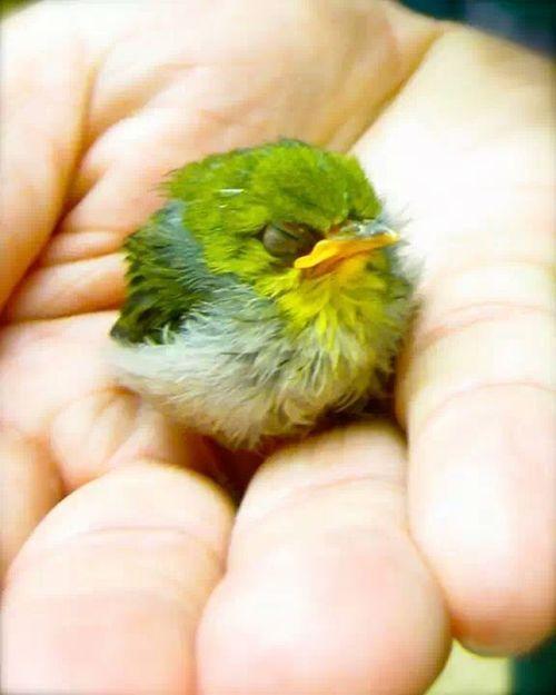 "(peep)  It's the same shape of those ""angry birds"" !!!"
