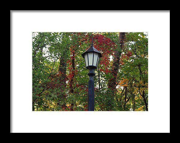 light, lightpost, autumn, fall, foliage, wildwood park, toledo, ohio, michiale schneider photography