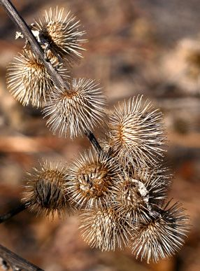 Dog Days of Summer: How to Remove Burrs