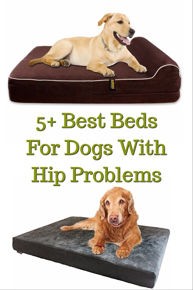 258 best gift ideas for dogs and their owners images on pinterest