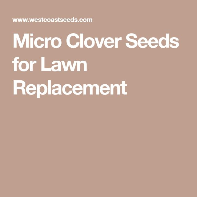 Micro Clover Seeds for Lawn Replacement