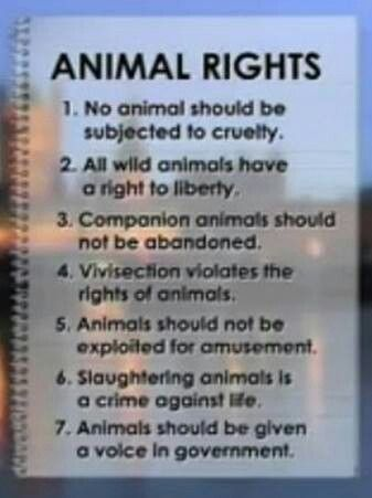who fights for animal rights