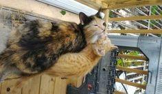 Neighborhood Cat Brought Her Kitten with Broken Leg to Couple She Befriended