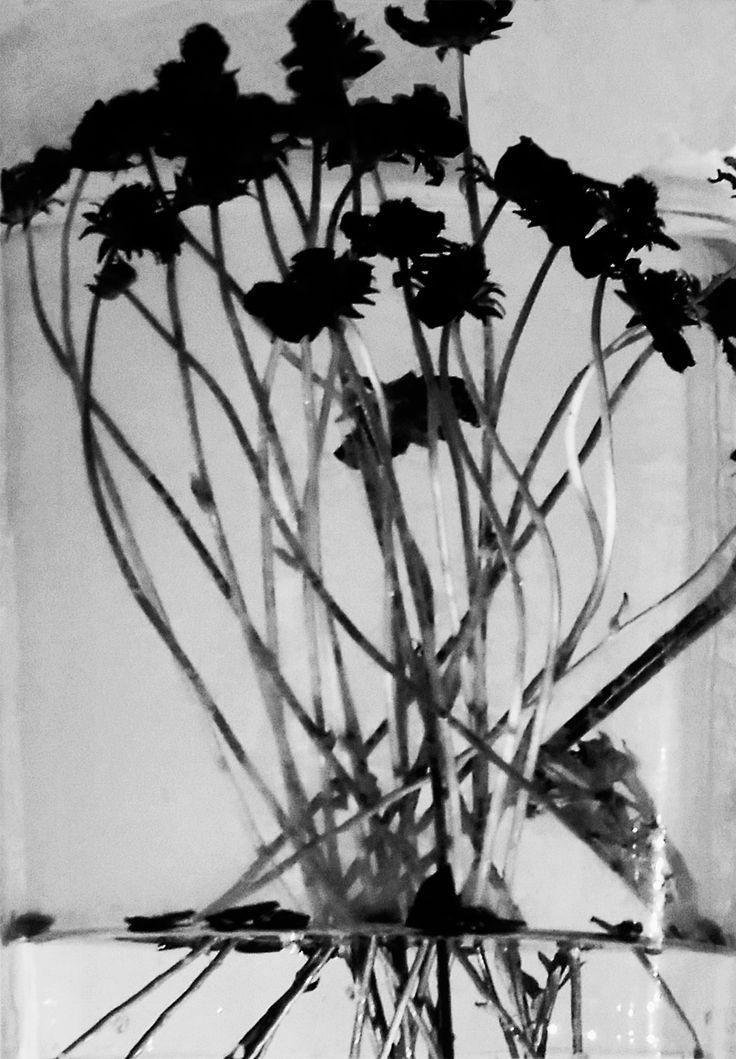 flowers dance - fioreria donaflor