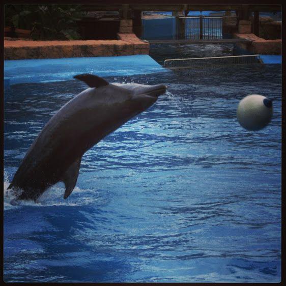 Nikkie Geldenhuys - Google+ - Just amazing & beautiful... #Dolphins #Sea