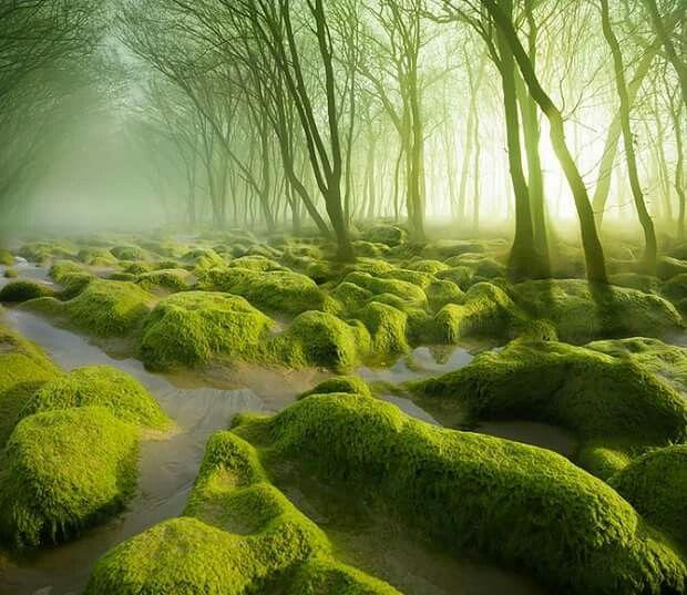 Moss swamps, Romania