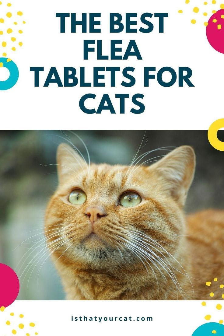 What Are The Best Flea Tablets For Cats In 2020 Cat Fleas Cat Has Fleas Cats