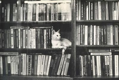 .: Bookshelves, Bookends, Books Display, Call Bookshelfi, Libraries Cat, Pet, Books Love, Photo, Animal